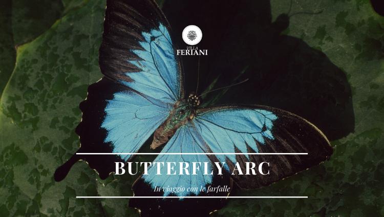 Casa delle Farfalle e Bosco delle Fate – Butterfly Arc (Pd)
